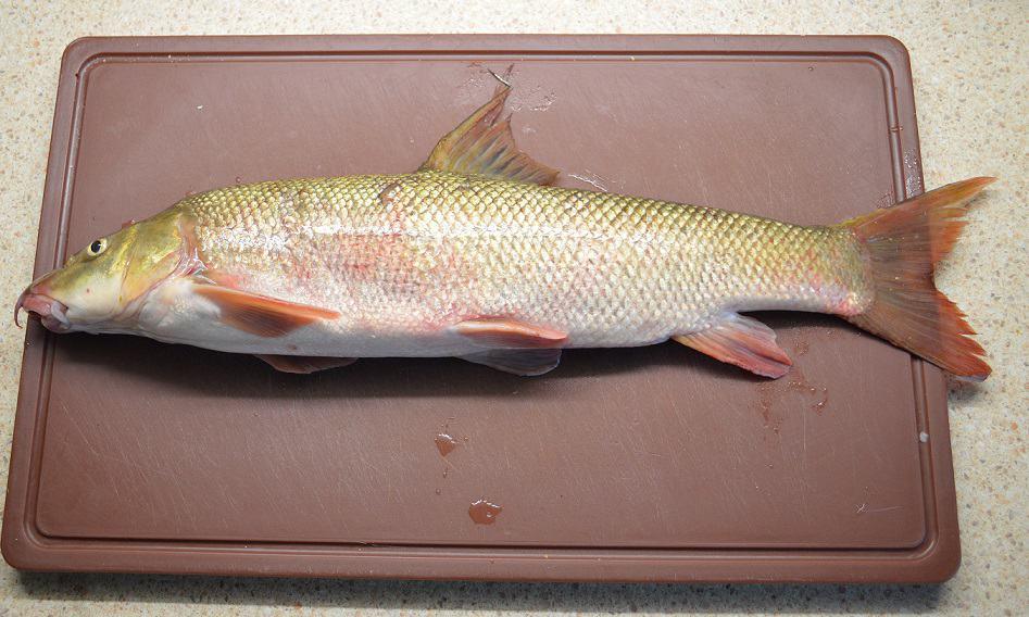 Keptas ūsorius. Lietuviška žuvis. Receptas - bulviukose.lt