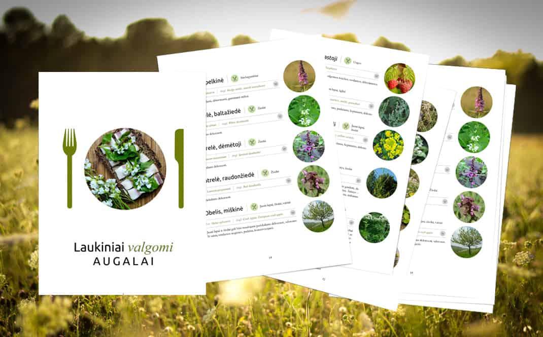 Laukiniai valgomi augalai. NEMOKAMAS leidinys!